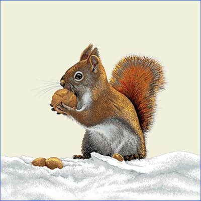 Carré de tissu écureuil