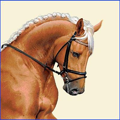 Carré de tissu cheval